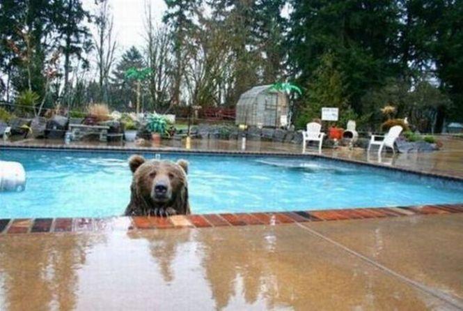 Медведь как ребёнок в бассейне ...